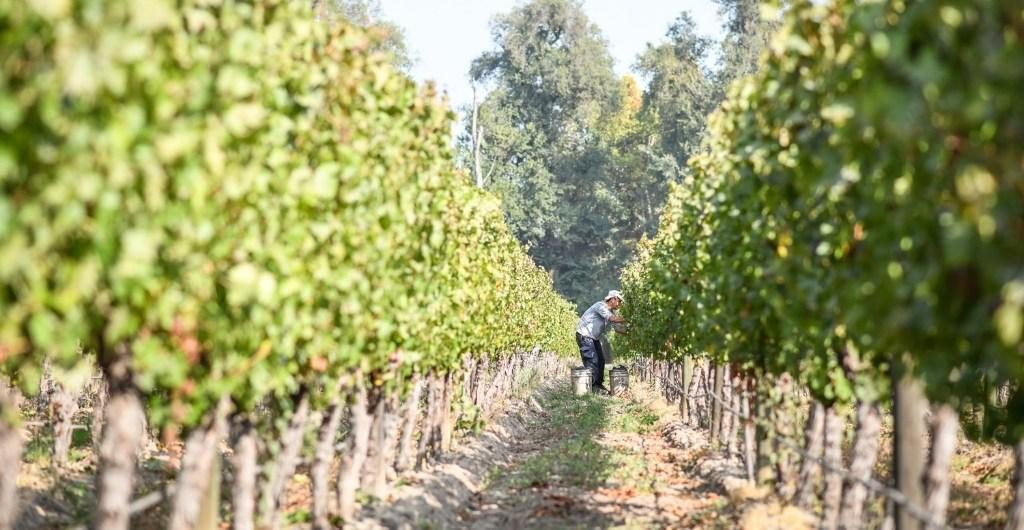 Certificación viña sustentable Vinos de Chile - Cousino Macul