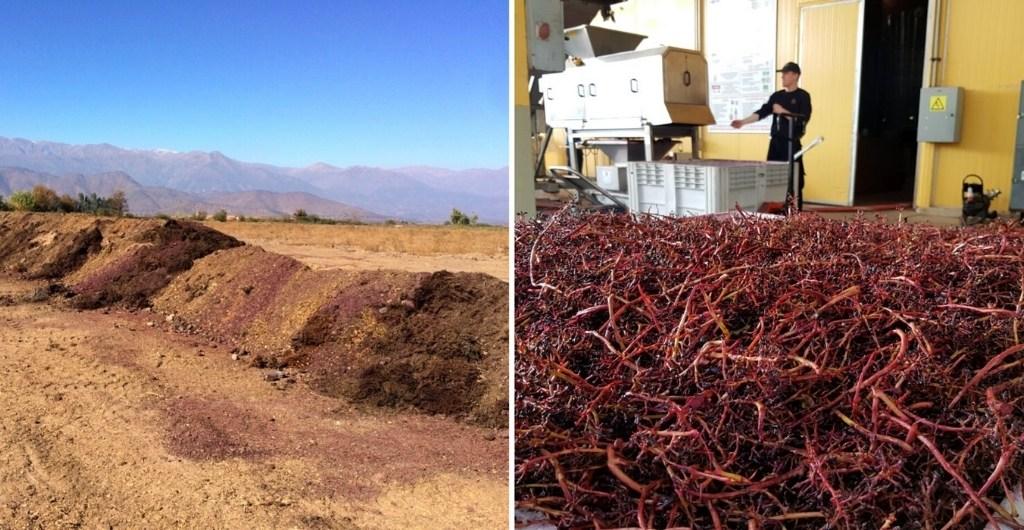 Compost Viña Cousiño Macul - Reutilización del 100% de residuos de vendimia